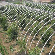 天津宝宏钢铁专业生产大棚管,工期快,价格低!