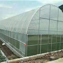 天津市宝宏钢铁 大棚管 蔬菜大棚管 葡萄大棚管 温室大棚 欢迎来电询价