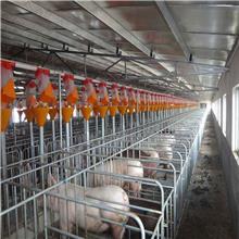 300-6000平方米 活动板房 养殖用 家安畜牧