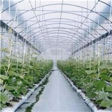 圆管蔬菜棚_单体蔬菜拱棚_简易插地蔬菜棚_结构简单_安装方便