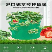毛毡土豆袋无纺布可透视草莓种植植物生长袋growbag