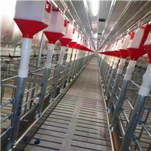 猪哈哈 产床定位栏 现货供应母猪定位栏落地式 带漏粪板定位栏 尺寸多样