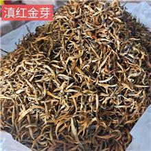 滇红金芽 金芽古树茶叶销售 滇红古树红茶