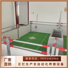 正红母猪产床销售-三棱钢地板母猪产床-保育床