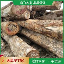大量批发零售大风子TRC原木 黄乳木地板料 现货
