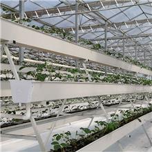 串珠式栽培 深液流果菜 新疆串珠式栽培 和丰景观
