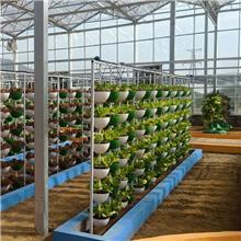 串珠式栽培 西红柿无土栽培 无土栽培