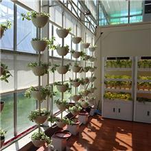 串珠式栽培 水果无土栽培 室内无土栽培