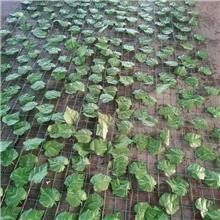 山体边坡树叶网 遮盖防护网 矿山土坡复绿伪装覆盖网 人造绿叶铁丝网