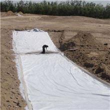 厂家直发透水土工布 无纺布 河道养护隔离短丝长丝土工布批发