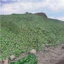 绿叶铁丝网 护坡网 山体绿化网 边坡网矿山复绿覆盖绿化网 土坡治理网