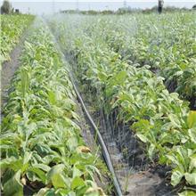 贴片式滴灌带   农业滴灌带  蔬菜大棚滴灌带  节水滴灌带厂家   量大优惠