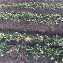 内镶贴片式滴灌带  节水滴灌带厂家 农用滴灌带  大棚滴灌带 大象节水