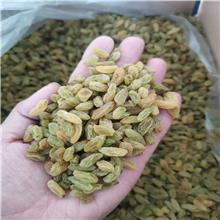新货树上黄风干葡萄干 食品辅料商用大颗粒葡萄干 多品种多规格奶茶用葡萄干
