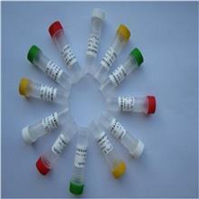 免疫球蛋白超家族成员5抗体价格