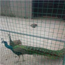 启华厂家生产 安全防护隔离 铁丝网围栏 养殖网格片厂家