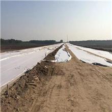 聚酯无纺土工布 白色达标长纤维透水土工布 公路养护土工布