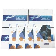 绵羊过氧化氢酶(CAT)ELISA试剂盒沪鼎生物